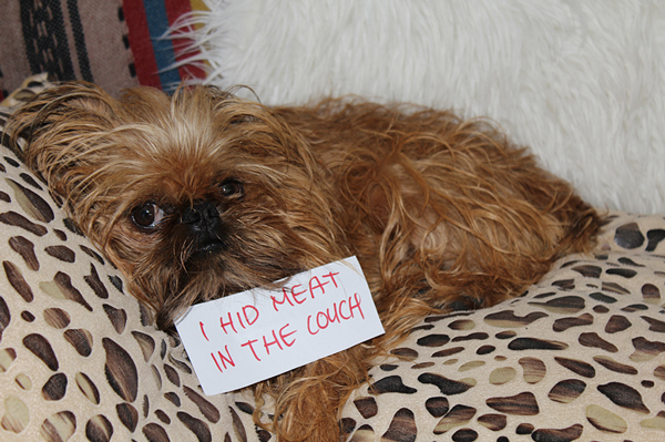 Pet Shaming Example